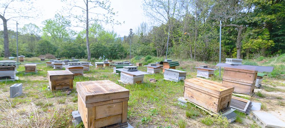 養蜂園画像