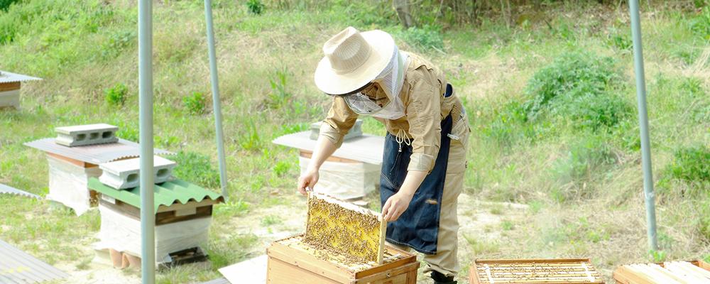ときつ養蜂園のはちみつのこだわり画像
