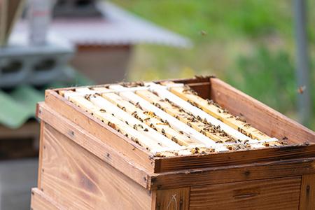 ミツバチたちへのこだわり画像