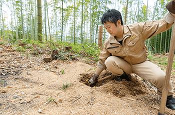 ときつ養蜂園の「早掘りタケノコ」画像