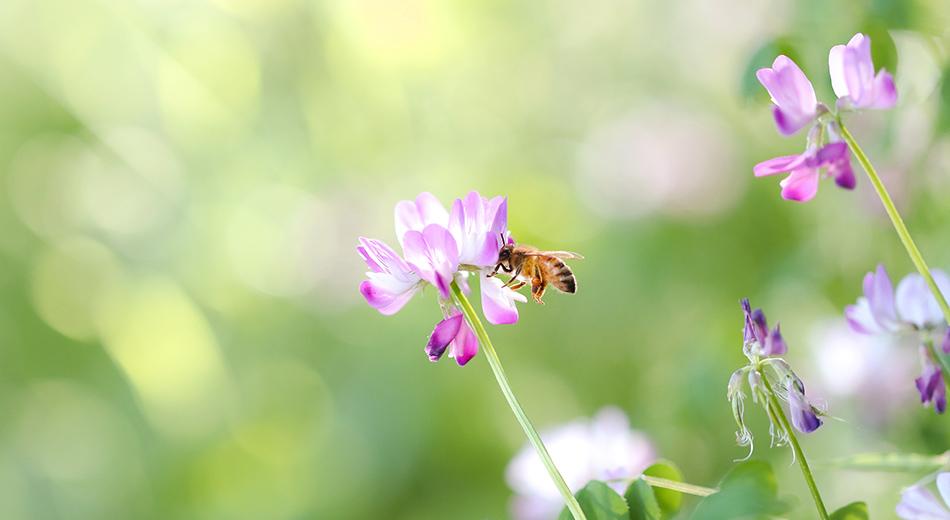 ミツバチ達の恩恵を皆様に画像2