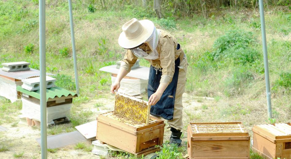 ミツバチ達の恩恵を皆様に画像3